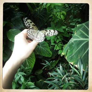 蝶がとっまった写真家の手